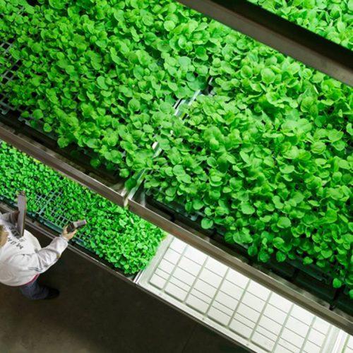 Plant Tray
